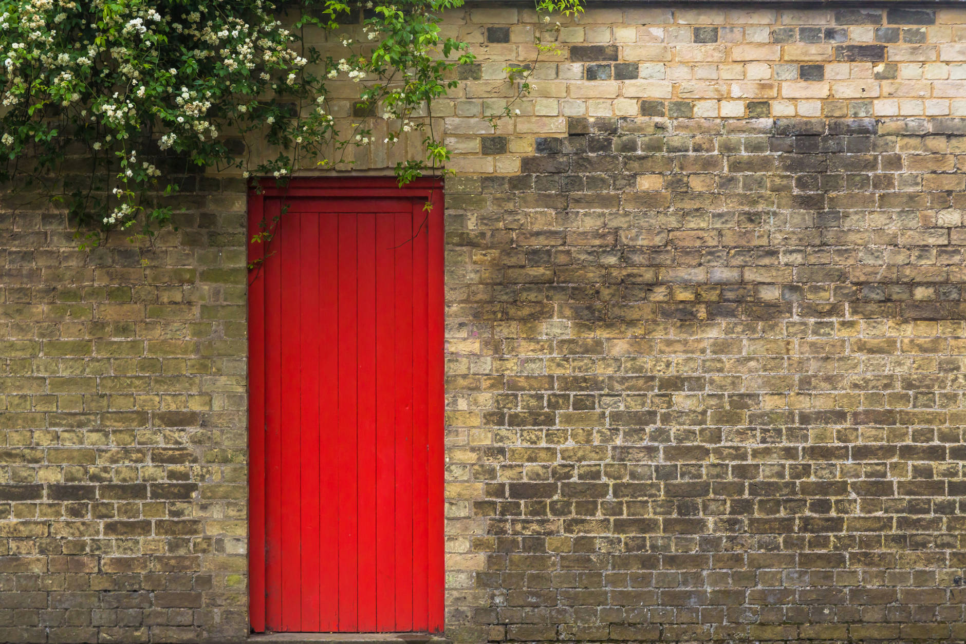 Red door on brick wall with vegetation