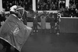 President Dwight D. Eisenhower doffed his homburg and bowed toward Miss Burma, the GOP mascot elephant from Ohio, when she stood up on her hind legs for him during inaugural parade in Washington, Jan. 21, 1957. The elephant also earned the applause of John and Barbara Eisenhower, the president's son and daughter-in-law, and first lady Mamie, for her stunt.  (AP Photo)