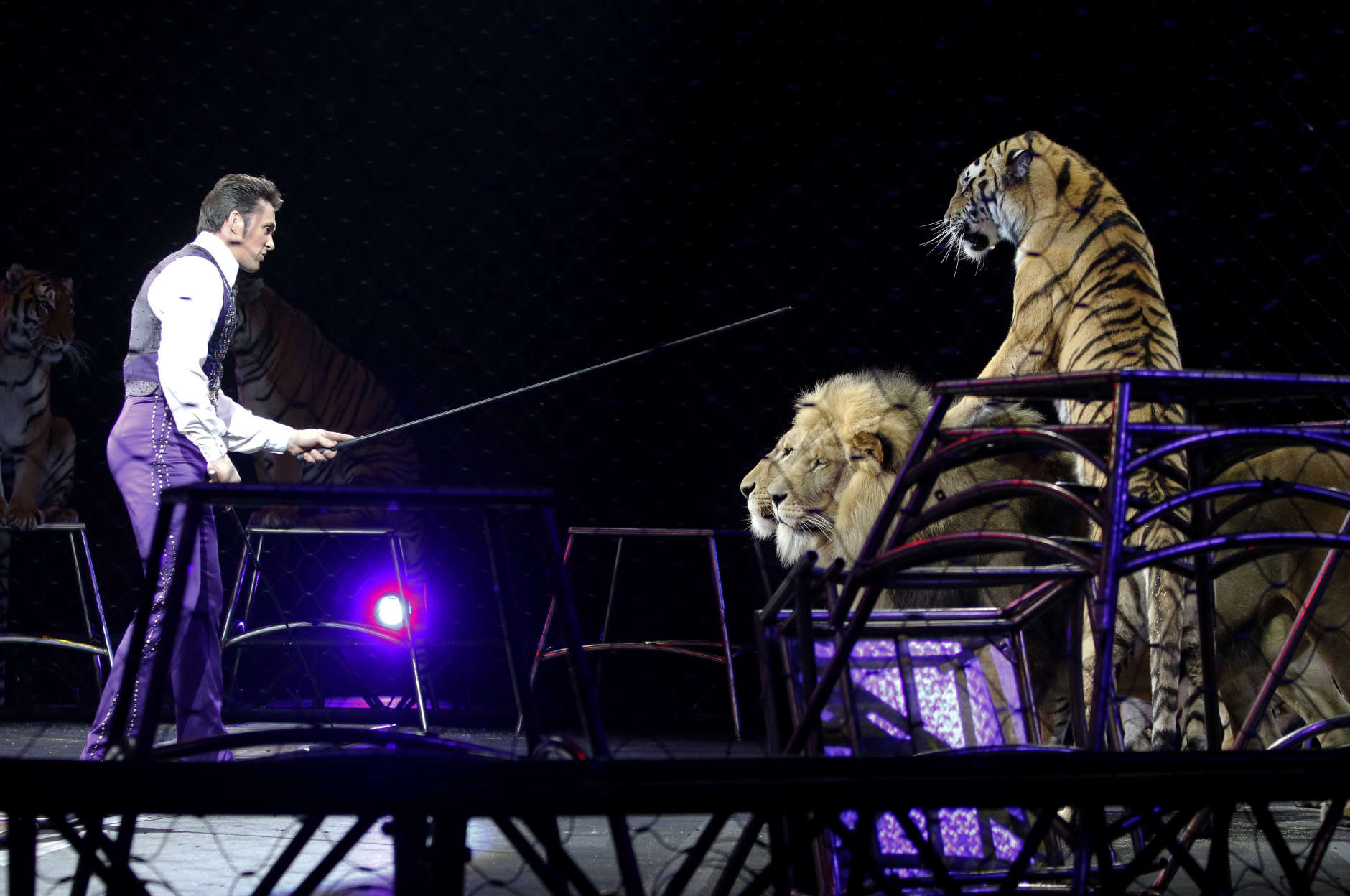 Big-cat trainer Alexander Lacey performs with lions and tigers Sunday, May 1, 2016, in Providence, R.I., during the show where Asian elephants made their final performance in the Ringling Bros. and Barnum & Bailey Circus.  (AP Photo/Bill Sikes)
