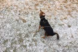 A dog gives a shake in light snow falling Saturday morning in Charles County, Md. (WTOP/Darci Marchese)