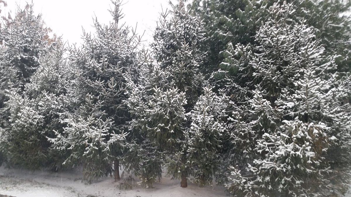 Snow coats the trees along the roads in Virginia on Saturday morning. (WTOP/Kathy Stewart)