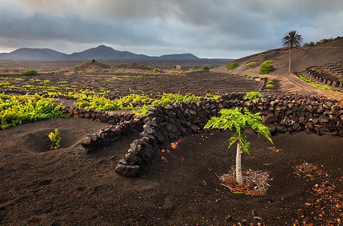 The beauty of the island of Lanzarote, Yaiza, Lanzarote, Canary Islands, Spain; Shutterstock ID 469916138