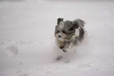 Is Fido freezing? How to keep pets safe during cold snaps