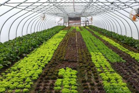 Tomatoes and lettuce and eggplant, oh my! Farming warm-weather produce in winter