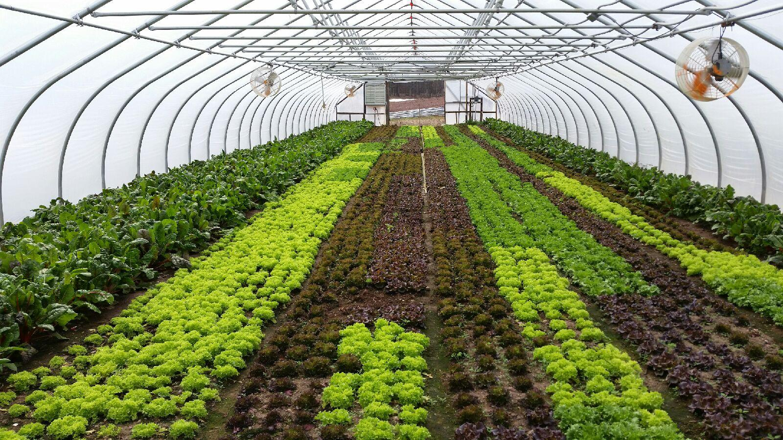 Tomatoes and lettuce and eggplant, oh my! Farming warm-weather