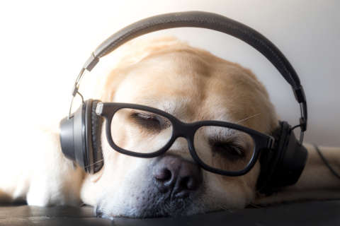 Do dogs have a favorite kind of music? Study says yes