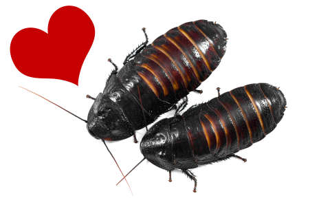 Cockroaches named after exes to be fed to Texas zoo animals