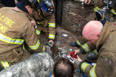 Firefighters rescue dog in DC house fire