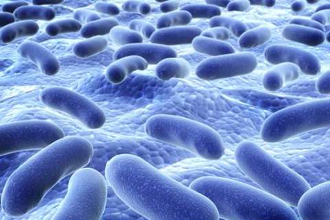 Bring on the bacteria: Diverse, healthy microbes impact how you age
