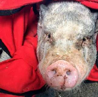 4 residents, 1 pig displaced in Va. house fire