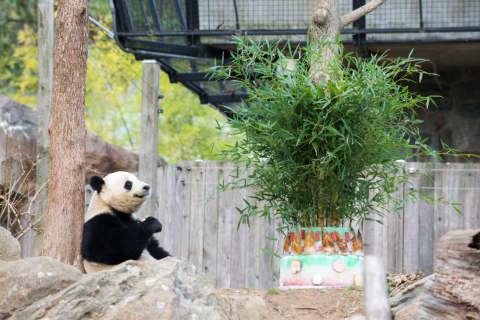 Bao Bao's travel itinerary to China