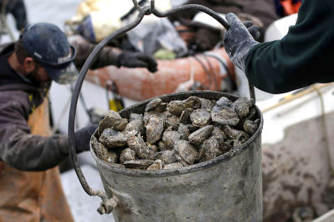Chesapeake oyster proposal alarms environmentalists
