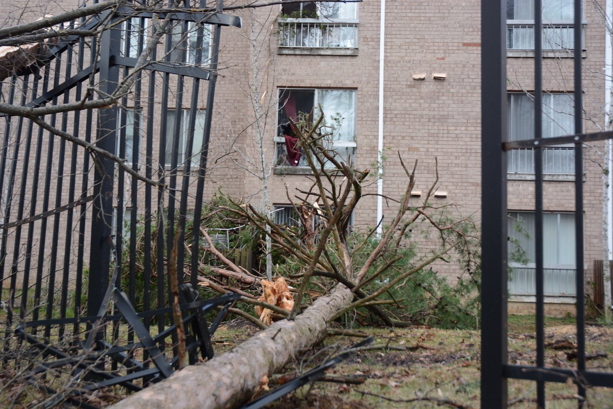 Tree fallen into apartment building