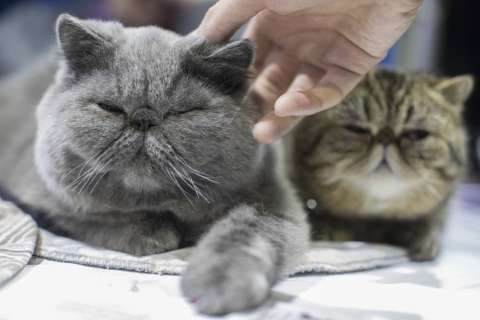 How to pick the right vet for your pet, for the right price