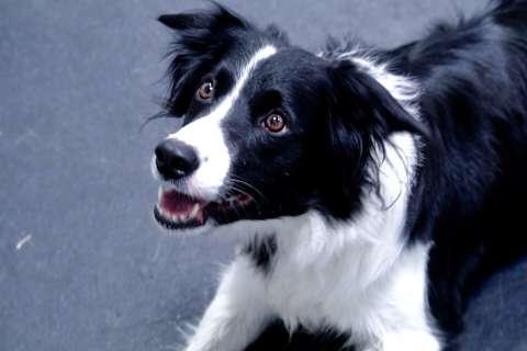 Dog gym breeds enthusiasm and bonding