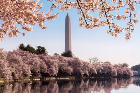 Key events: National Cherry Blossom Festival 2017