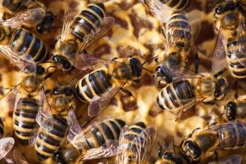 The 40-pound swarm: Beekeepers recount an intimidating job in Va.
