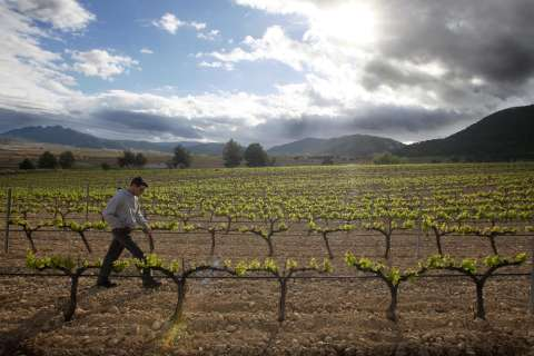 Wine of the week: Secret wines of Murcia