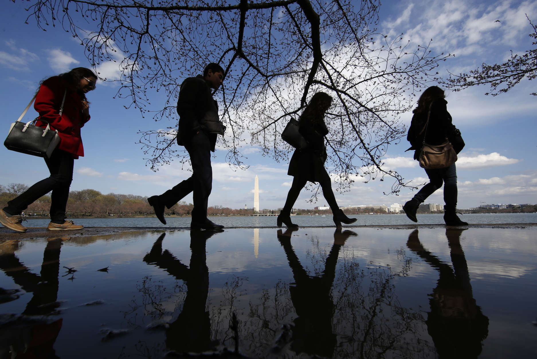 People skirt the edge of a puddle as they walk around the Tidal Basin under the cherry trees with the Washington Monument in the background, Saturday, March 18, 2017, in Washington. (AP Photo/Alex Brandon)