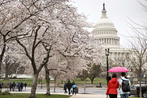 How to get around during the 2018 National Cherry Blossom Festival