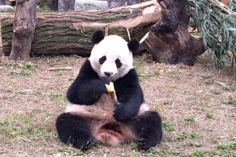 Keeper: Bao Bao enjoying new life in China