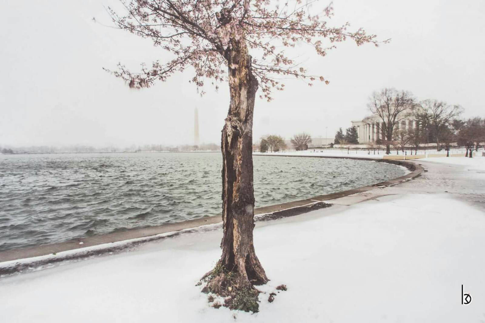 Cherry Blossoms in the snow on March 14, 2017. (Courtesy Billy Khuong)