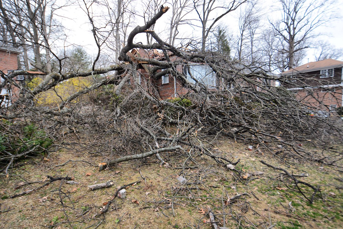A tree knocked down in Forest Glen, Maryland, Wednesday, March 1. (WTOP/Dave Dildine)