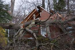 Wind knocked this large oak tree into a house in Forest Glen, Md. No one was injured but the home owners were displaced. (WTOP/Dave Dildine)