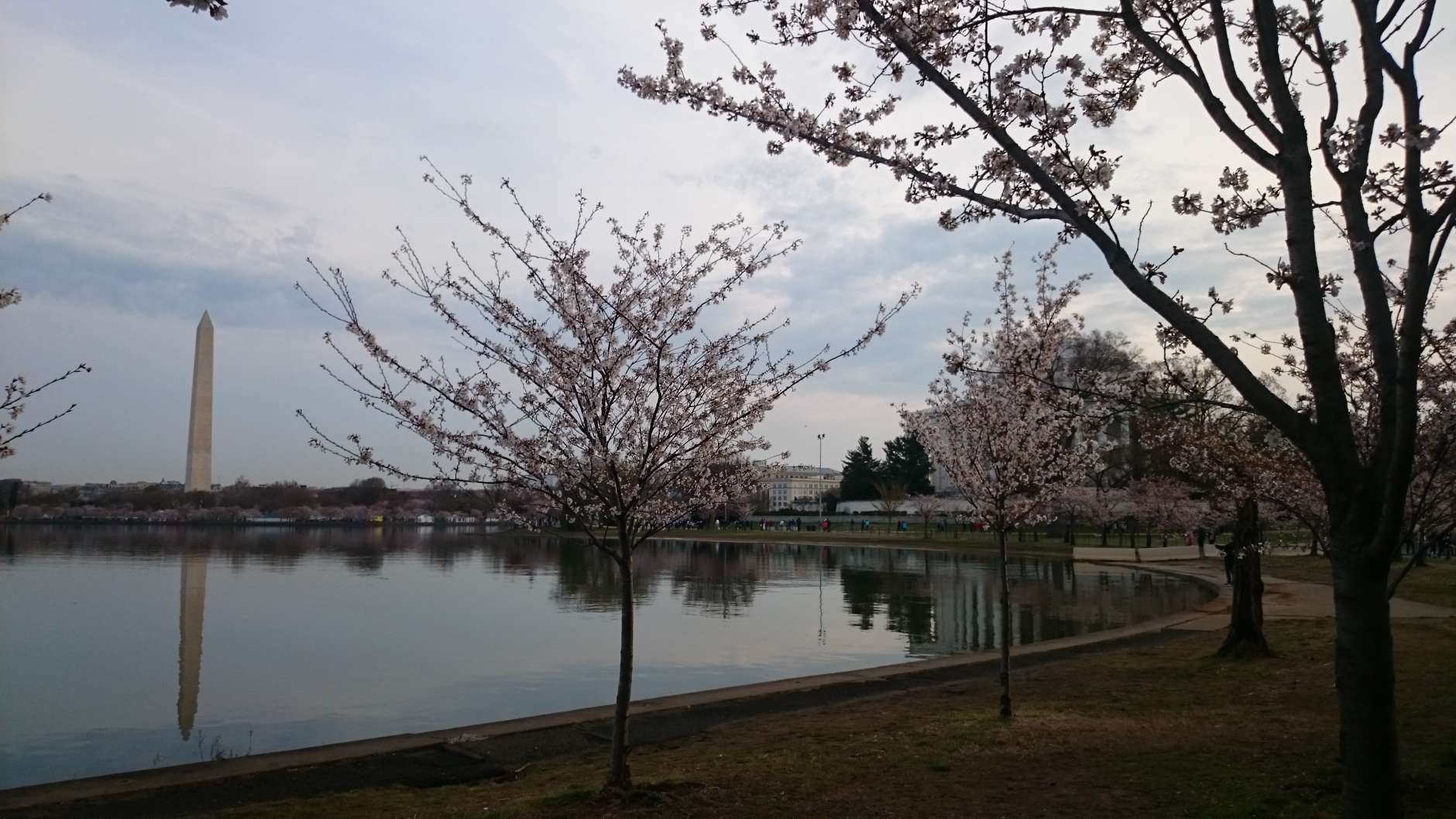This year is the 90th anniversary of the first National Cherry Blossom Festival. (WTOP/Dennis Foley)