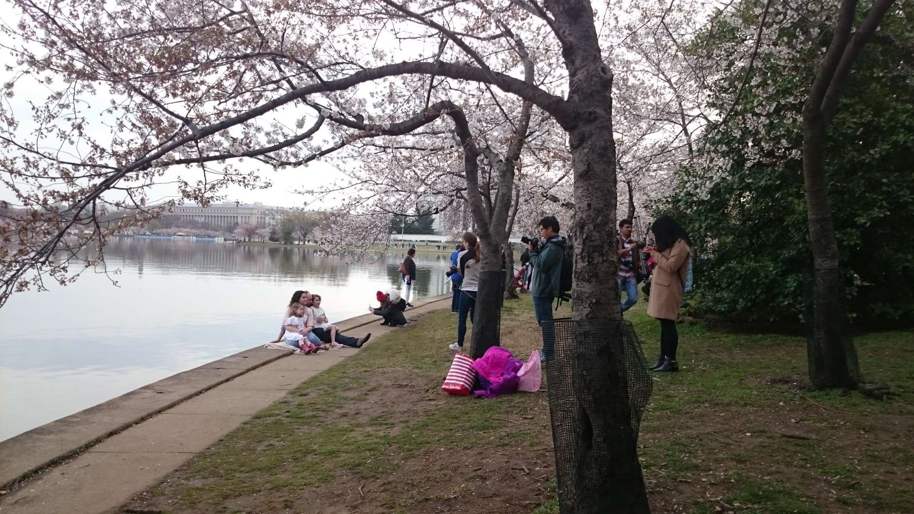 It is a rite of spring in D.C.—cherry blossoms and tourists. (WTOP/Dennis Foley)