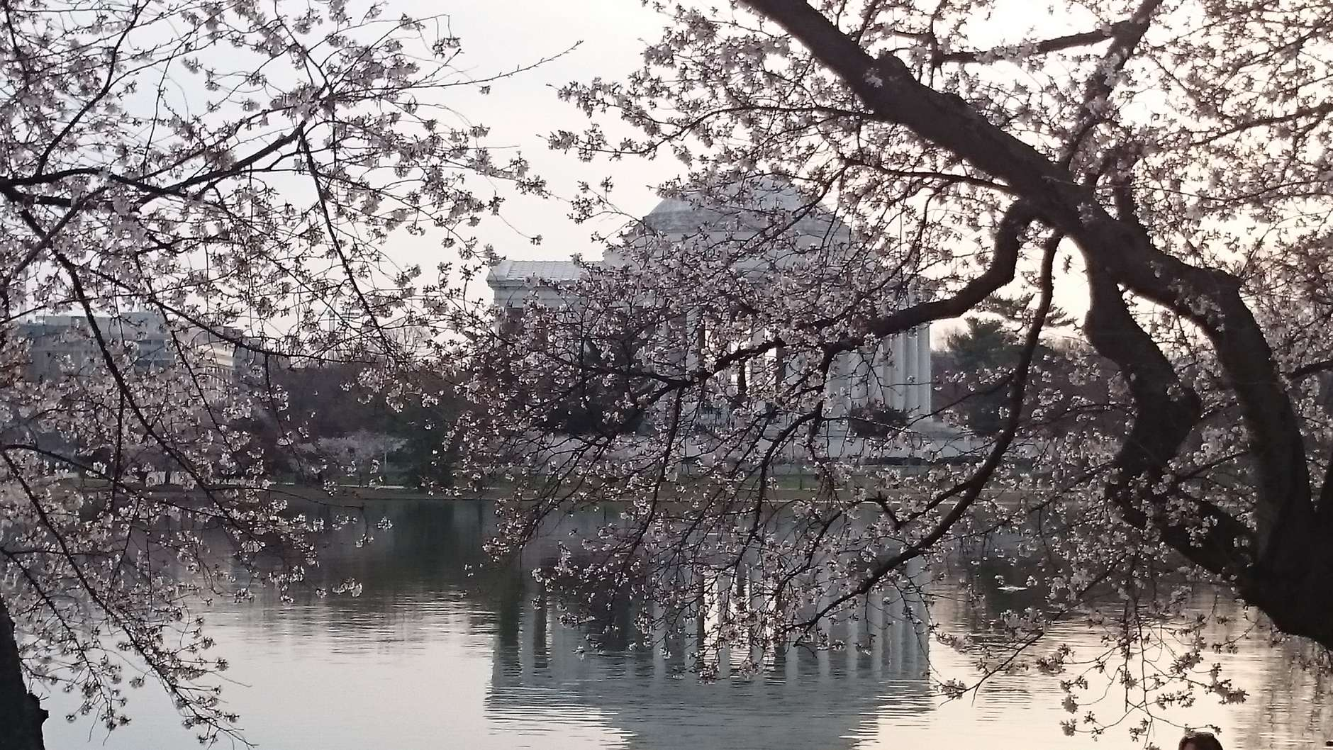 Throughout its four-week run, the cherry blossom festival hosts a variety of family-friendly events — from concerts to parades and more. (WTOP/Dennis Foley)