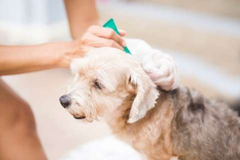 Before taking your pet to a groomer, shop around