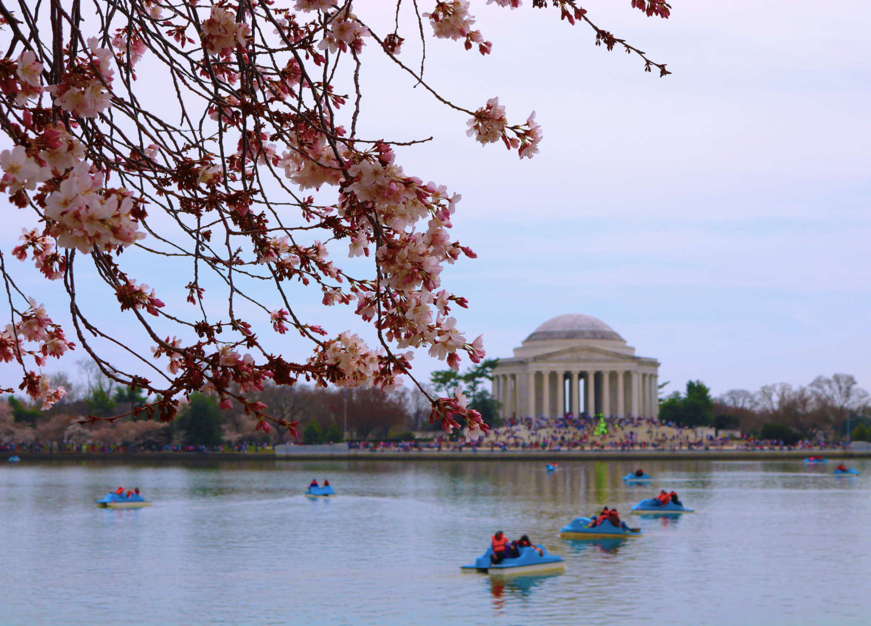 A photo overlooking the Tidal Basin, one of the best spots to catch the cherry blossoms at their peak, captures the cherry blossoms framing the Jefferson Memorial. (WTOP/Hanna Choi)