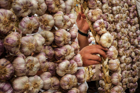 Fear not, area garlic lovers: Your sprouts are fine