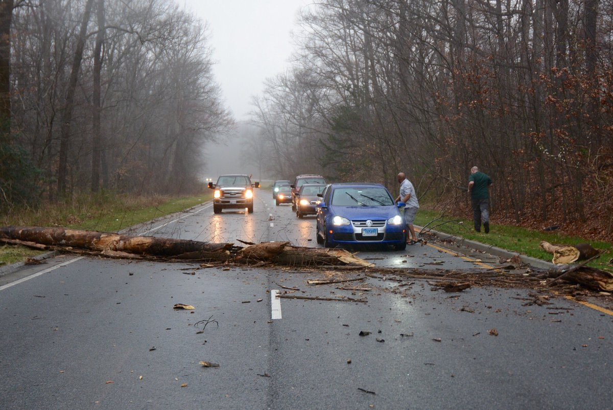 A large, dead tree is down across outbound Suitland Parkway, between Suitland Road and Forestville Road, on Wednesday March 1, 2017. (WTOP/Dave Dildine)