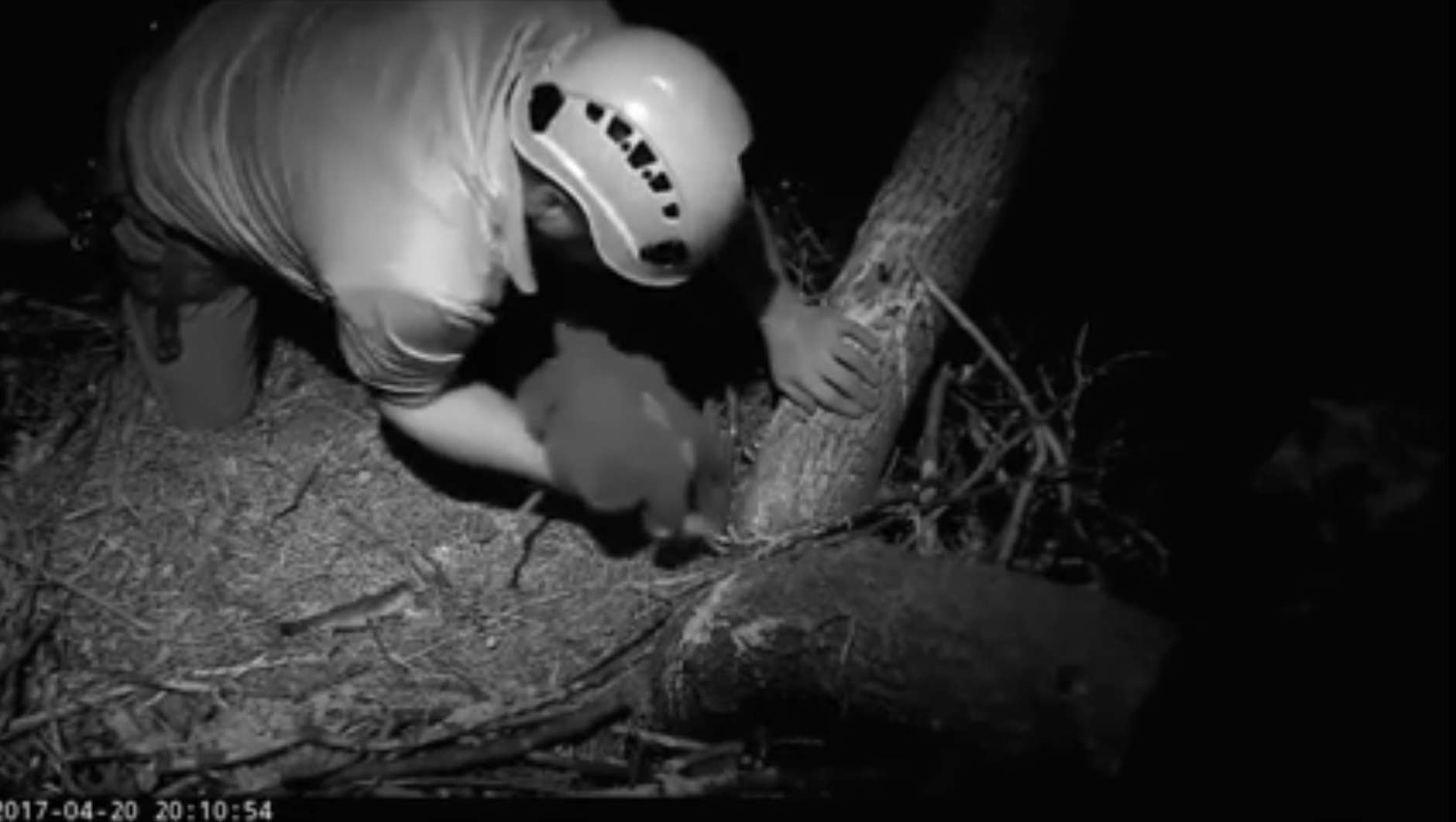 Scenes from the rescue of the eaglet Thursday evening. (C) 2017 American Eagle Foundation, www.eagles.org
