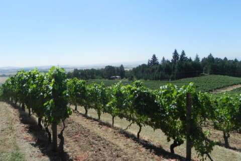 Wine of the Week: Bright and crisp white wines from Oregon