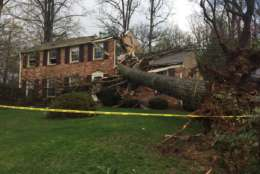 A massive tree uprooted in storms and sliced into a home in Annandale Thursday. (WTOP/Michelle Basch)