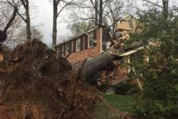 The tree crashed into a two-story house in the 8200 block of Toll House Road in Annandale Thursday afternoon. (WTOP/Michelle Basch)