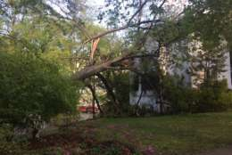 Photo of a large tree in the side of a home