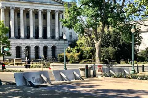 Trees near Capitol inspected after falling branch kills worker