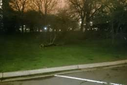 Trees were downed near the Tidal Basin after Thursday's storms. (WTOP/Dennis Foley)