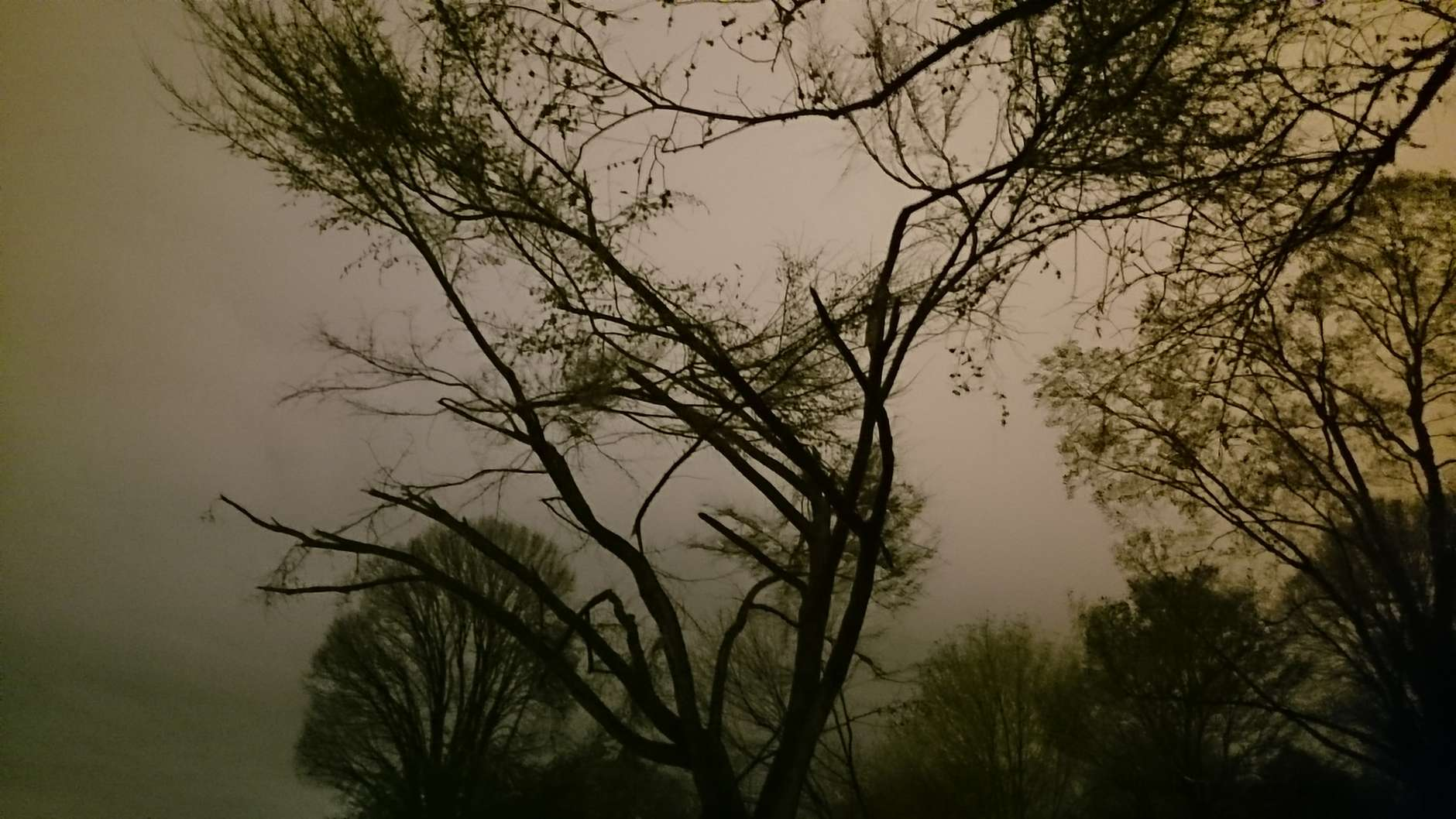 Snapped branches near Tidal Basin. (WTOP/Dennis Foley)