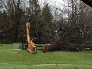 A tree downed by the storm along 522 near the entrance to Commonwealth Park. (Courtesy Carol Hoffman)