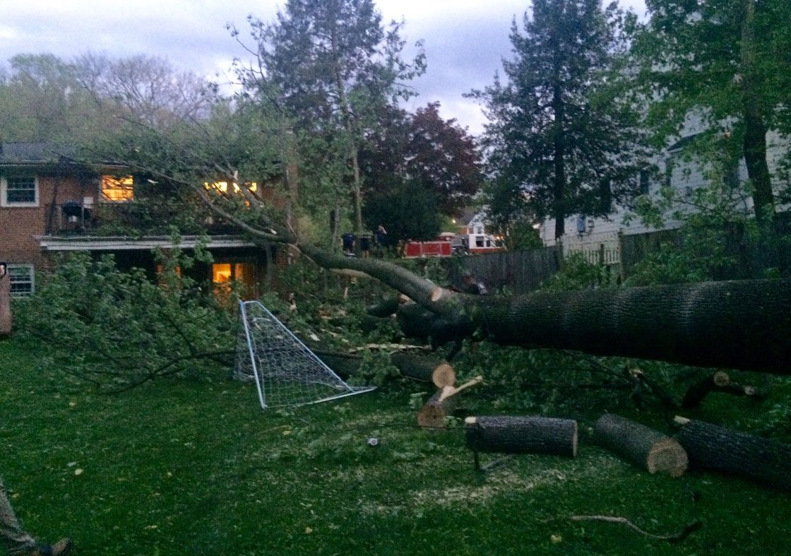 A large tree on the 4900 block of Elsmere Avenue in Bethesda, Maryland, falls after a storm on April 21, 2017. (Courtesy Montgomery County Fire and Rescue/Pete Piringer)