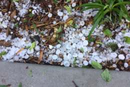 Hail gathers after a storm in the D.C. area on April 21, 2017. (Courtesy Don Squires)