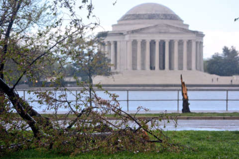 Storm pounds region, uproots cherry trees, drops hail