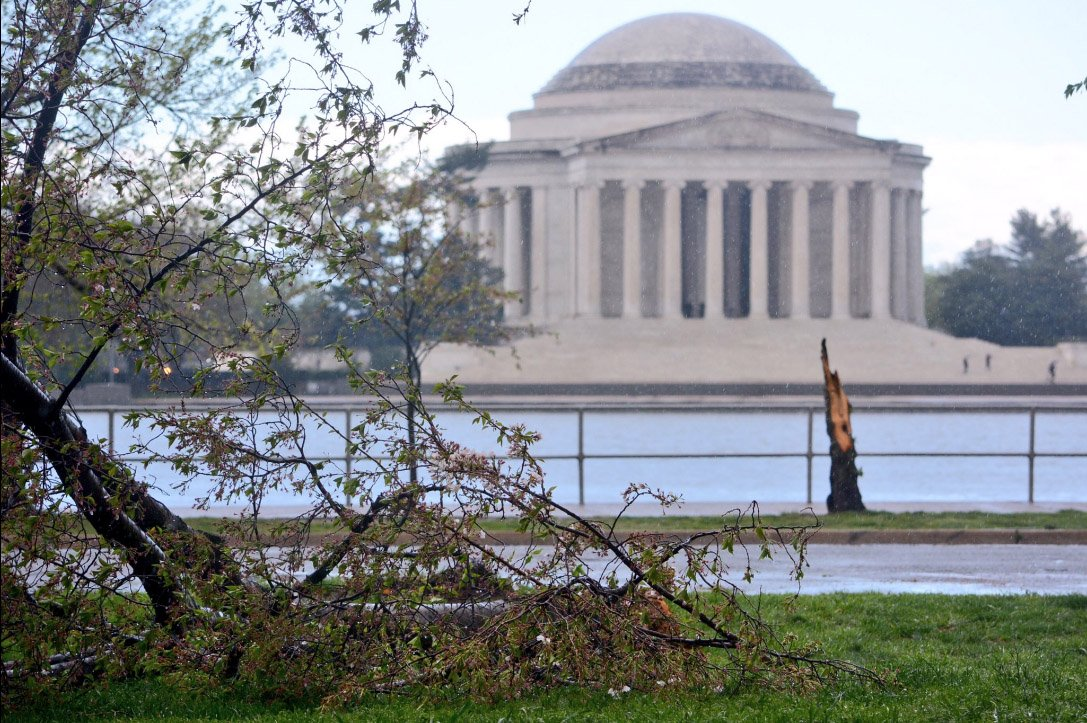 Storm Pounds Region Uproots Cherry Trees Drops Hail Wtop