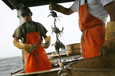 Sign of summer: Crabbing season kicks off