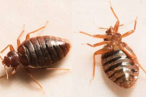 DC ranks 13th on pest control firm's list of top bedbug-infested cities